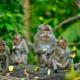Exotic Monkeys
