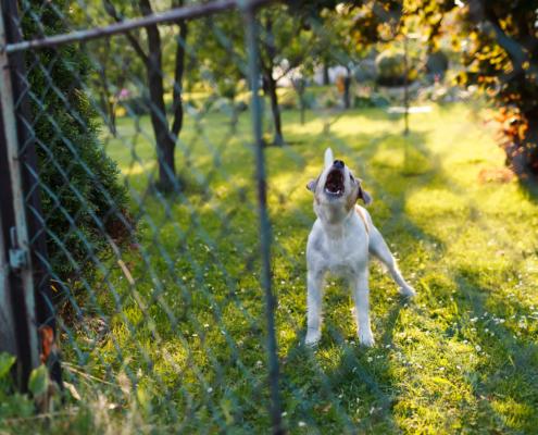 Nuisance Dog barking